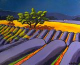 Provence lavanders fields