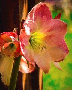 Day lilies in Bloom - Foto By Rudy