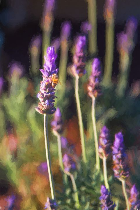 Lavender Bee - Foto By Rudy