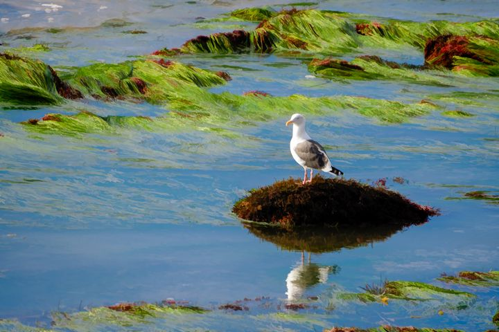 Jonathon Livingston Seagull - Foto By Rudy