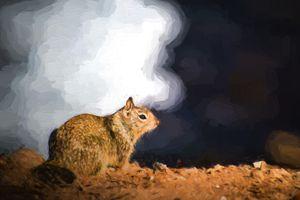 Coastal Brown Squirrel