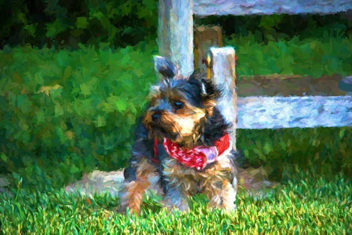 Morning Yorkiee - Foto By Rudy