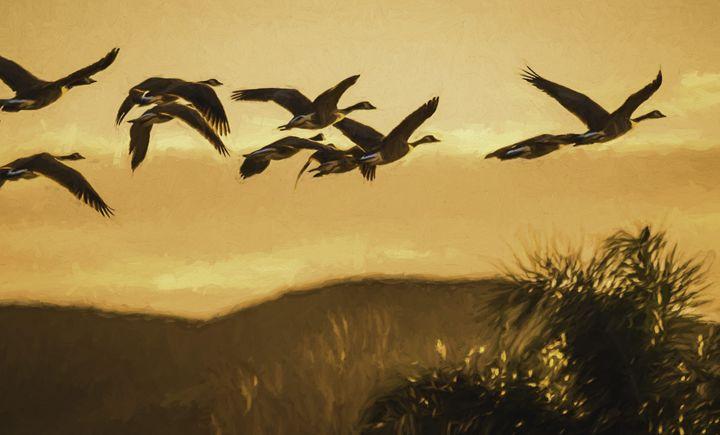 Seasons take Flight - Foto By Rudy