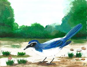 The Blue Jay - George's Art