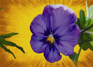 Purple pansy - aurelei_lorelei
