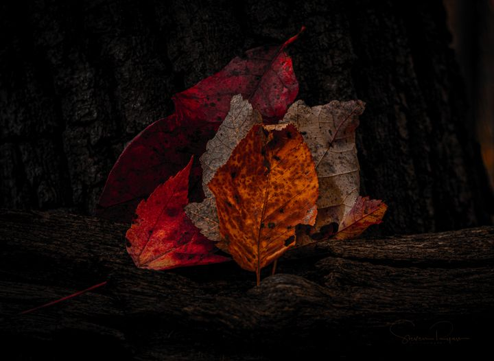 Collection of Fall - Steven G. Ryan