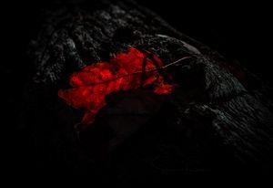 Scarlet has Fallen