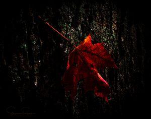Captured Flame - Steven G. Ryan
