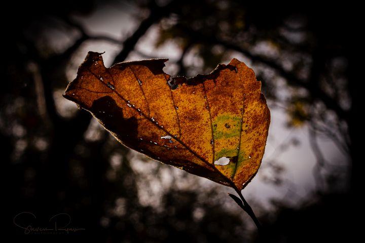 Fall foliage - Steven G. Ryan