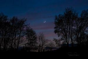 Cemetery Moon