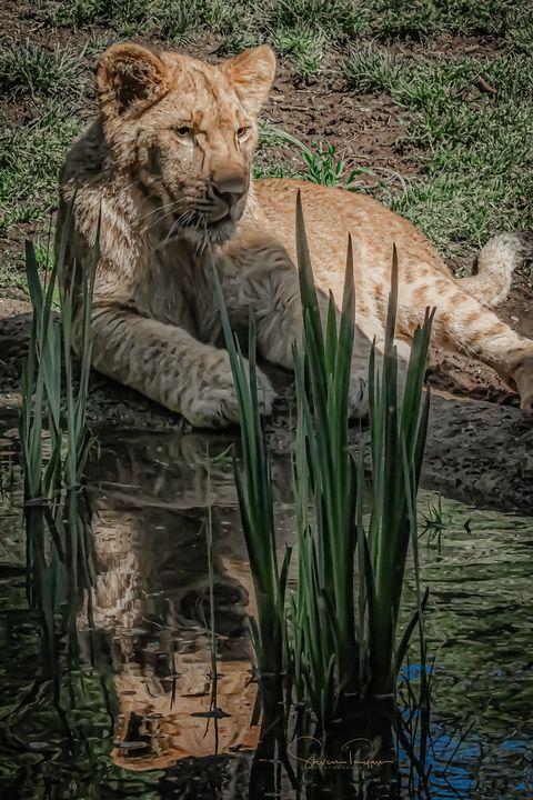 Cub King - Steven G. Ryan