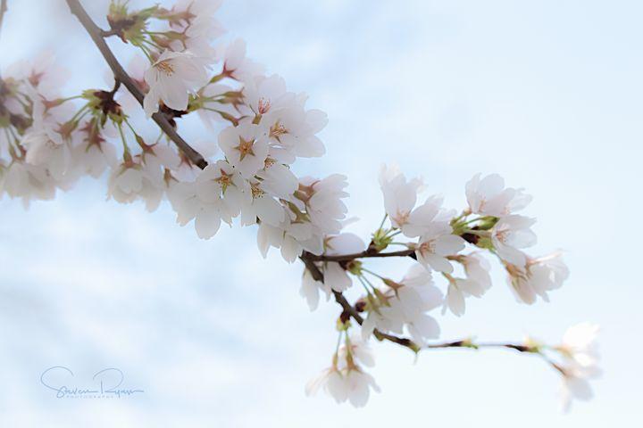 Springtime Impressionistic - Steven G. Ryan