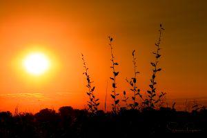 Sunrise on the Confederacy - Steven G. Ryan