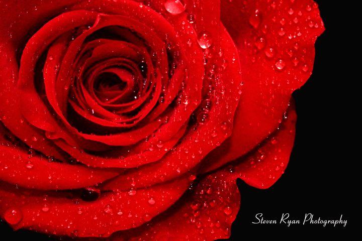 Rainy Rose - Steven G. Ryan