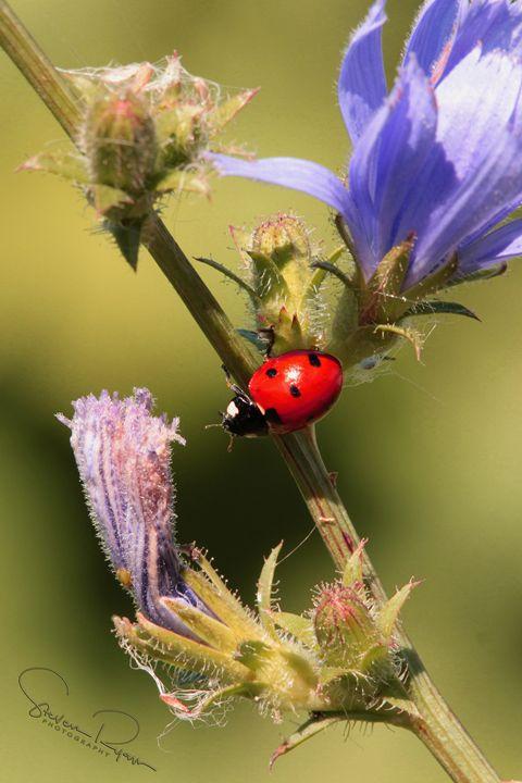 Ladybug, Ladybug - Steven G. Ryan