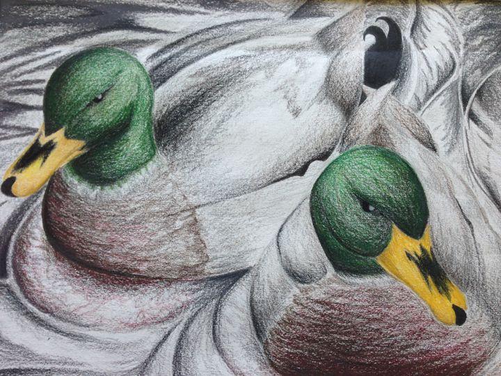 Ducks - Zyga