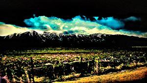 Sierra Nevada Color - Cammie Rayas