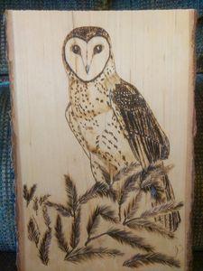 Barn Owl in pine bough