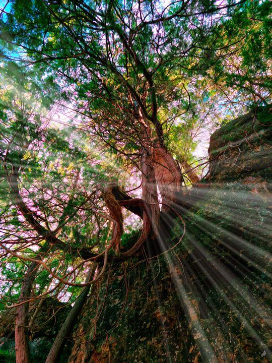 Storybook Tree - JSJ Designs Studio