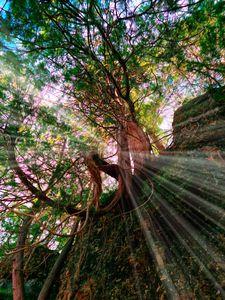 Storybook Tree - JSJ Designs+