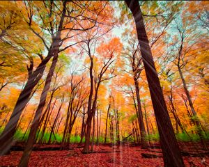 Sunray Colors of Woods