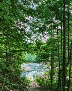 Falls Through Trees