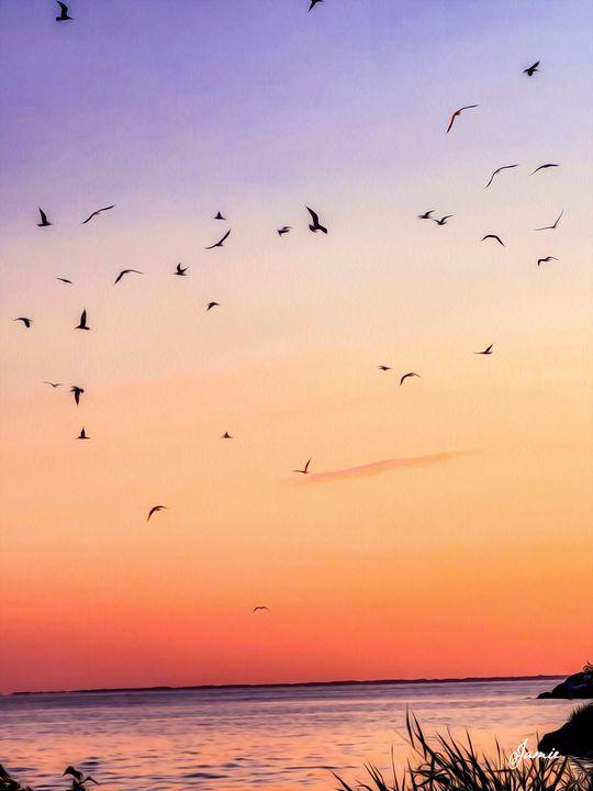 Birds Playing in the Sunset - JSJ Designs Studio