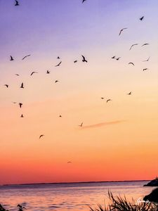Birds Playing in the Sunset - JSJ Designs+