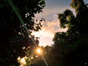 Dazzling Sunray
