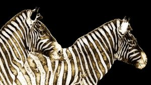 2 Zebras Side By Side - Xpressions of Creation