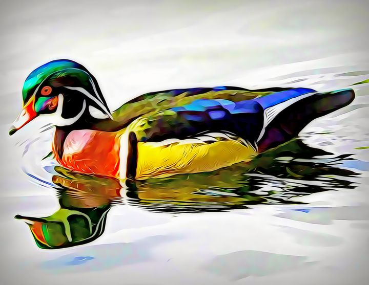 The Wood Duck - Xpressions of Creation