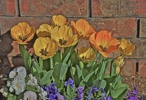 Tulips, Pansies and a Brick Wall - Xpressions of Creation
