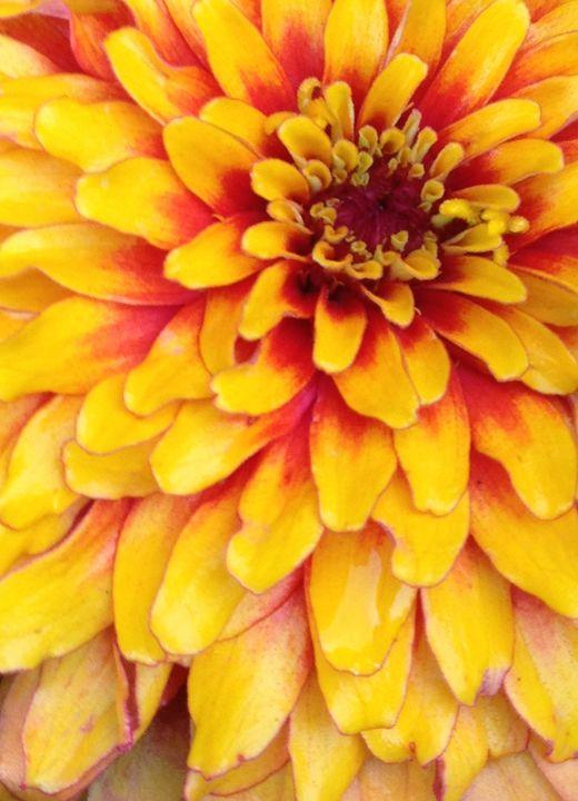 Fire Flower - Art by Autumn