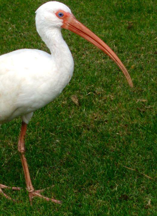 Egret - Art by Autumn