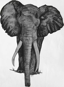 The Grey Elephant