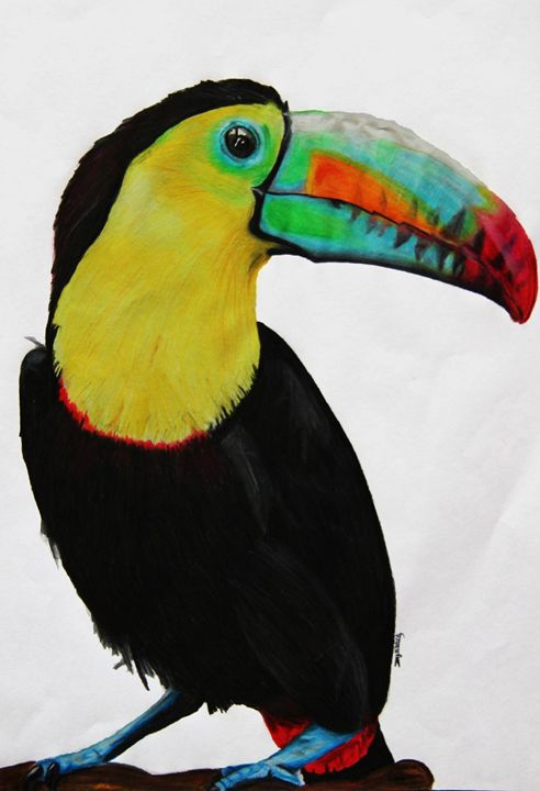 The Bright Toucan - ZeelMistry