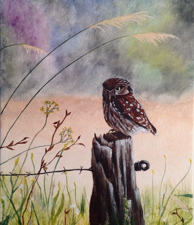 Owl - Stacey Phillips