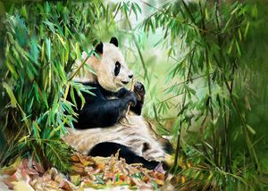 Pandas in the bamboo forest are eati