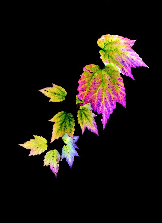Fall leaves - Paul Vig Photography