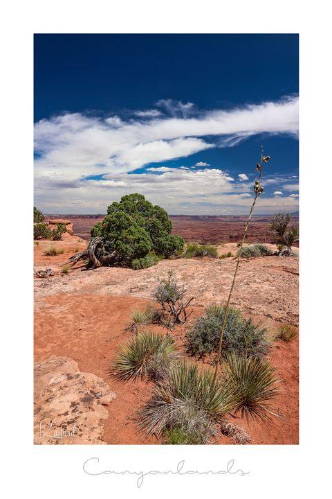 Canyonlands National Park - L'Oeil de la Photographe