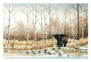 Black Bear by the Lake