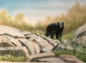 Black Bear on the Rocks