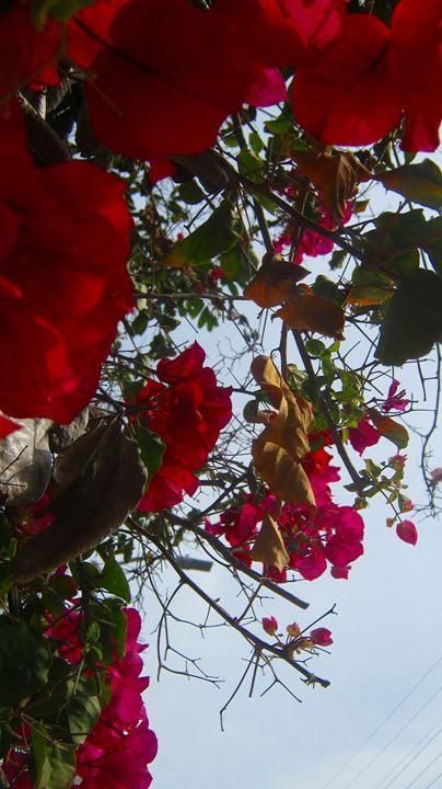 Cali flowers - Bee