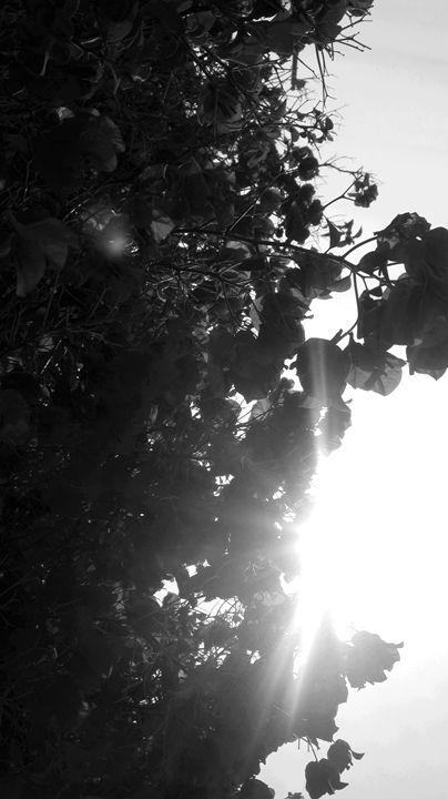 Black & White Flowers - Bee