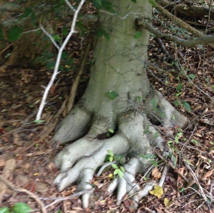 Tree Toes - Shirley Lynn