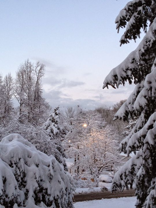 Frozen Tree Tops - Shirley Lynn