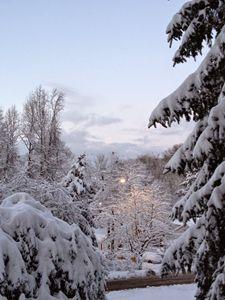 Frozen Tree Tops