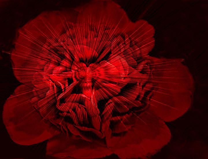 Flower Power - Irene Tolvay Dowdy Fine Art Photography