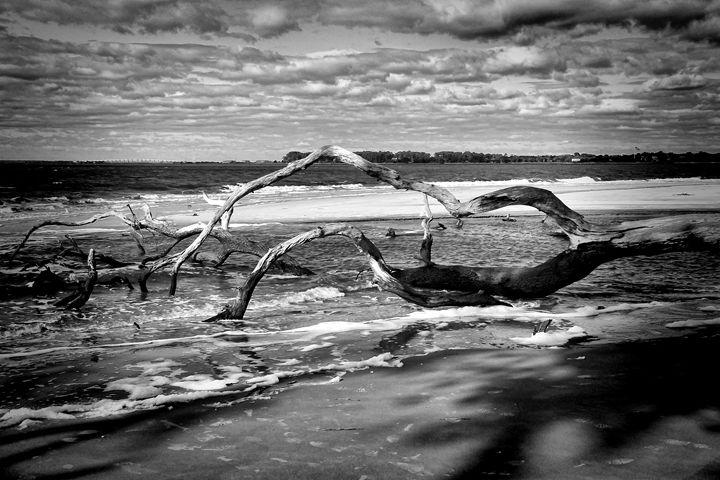 Driftwood Beach - Irene Tolvay Dowdy Fine Art Photography
