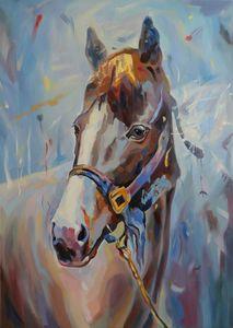interior horse